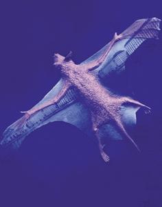 big-bat