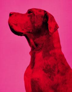 big-chien